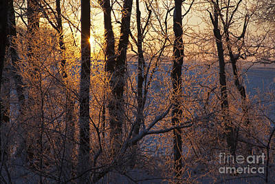 Photograph - Frost On Trees by Jim West