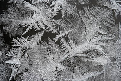 Photograph - Frost Patterns by Carolyn Reinhart