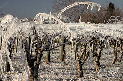 Frost Protection Print by Ron Sanford