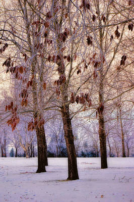 Photograph - Frost Trees by Leanna Lomanski