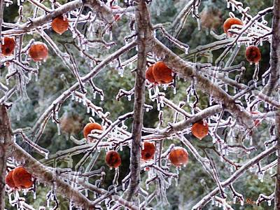 Photograph - Frosted Apple Tree by Shana Rowe Jackson