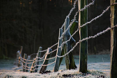 Photograph - Frosted Barbed Wire by Jay Evers