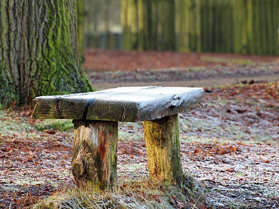 Dunham Massey Photograph - Frosted Bench by Susan Tinsley