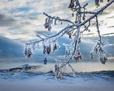 Photograph - Frosted Branch by Bill Pevlor