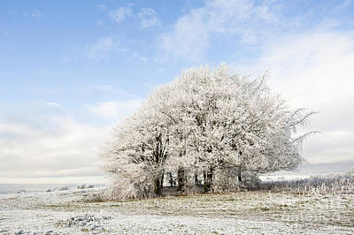 Country Scenes Photograph - Frosted Copse by Anne Gilbert