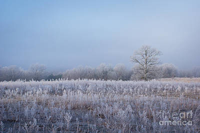 Photograph - Frosted Escape by Julie Clements