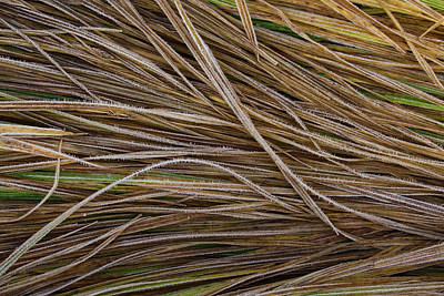 Frosted Grass Detail, Idaho Art Print by Eric Zamora