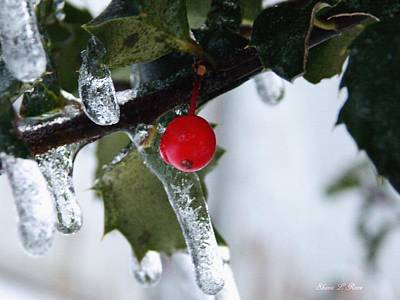 Photograph - Frosted Holly by Shana Rowe Jackson