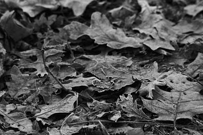 Frosted Leaves Black And White Original
