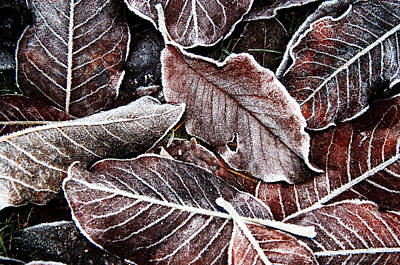 Frosted Leaves Art Print