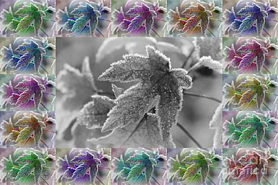 Painting - Frosted Maple Leaves In All Shades by J McCombie