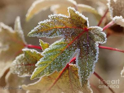 Painting - Frosted Maple Leaves by J McCombie