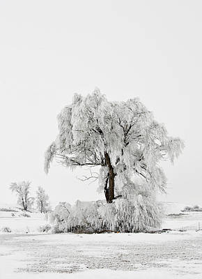 Photograph - Frosted by Mary Jo Allen