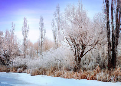 Montana Photograph - Frosted Pond by Jess Williams