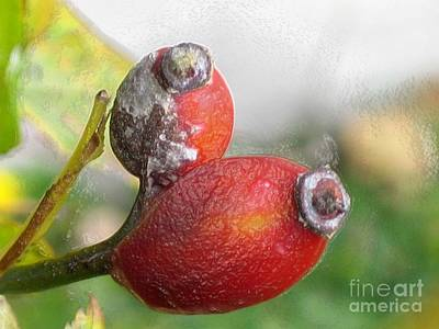 Photograph - Frosted Rosehips by Nina Silver
