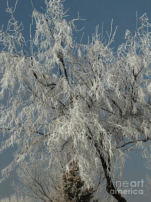 Photograph - Frosted Tree 01 by Serena Ballard