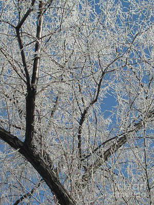 Photograph - Frosted Tree 03 by Serena Ballard