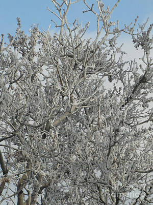Photograph - Frosted Tree 04 by Serena Ballard