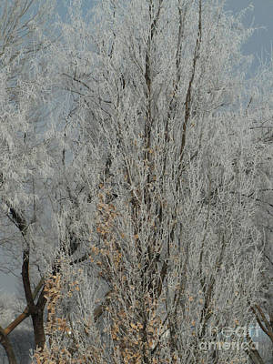 Photograph - Frosted Tree 08 by Serena Ballard