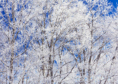 Photograph - Frosted Trees by Alan L Graham
