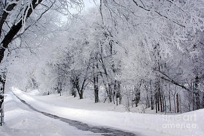 Photograph - Frosted Trees Path by Tina Hailey