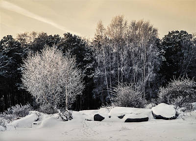 Photograph - Frosted Trees by Vladimir Kholostykh