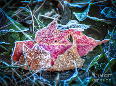 Photograph - Frosted Trio by Kerri Farley