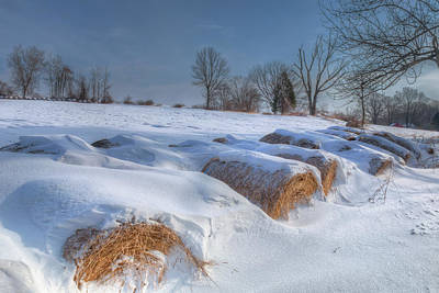 Photograph - Frosted Wheat by Bill Wakeley
