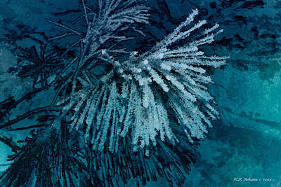 Photograph - Frostneedles by WB Johnston