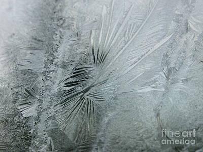 Photograph - Frosts Beauty  by Deborah DeLaBarre