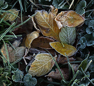 Frosty Autumn Leaves Art Print