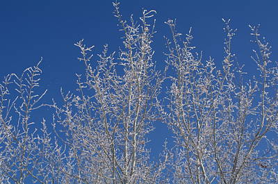 Photograph - Frosty Blue Sky by Sheila Byers