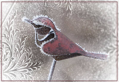 Frosty Cardinal Art Print by Patti Deters