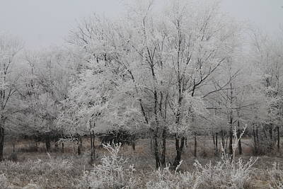 Photograph - Frosty Day by Alicia Knust