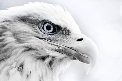 Bald Eagle Photograph - Frosty Eagle by Shane Holsclaw