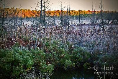 Photograph - Frosty Fall Marsh Morning  by Desiree Paquette