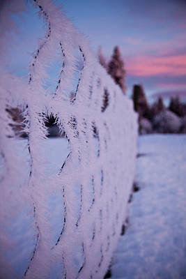 Photograph - Frosty Fence by Crystal Cox