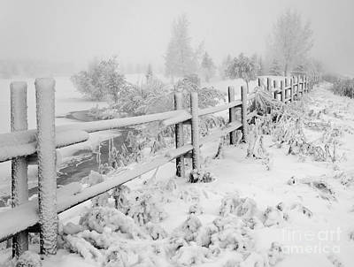 Photograph - Frosty Fenceline by Dee Cresswell