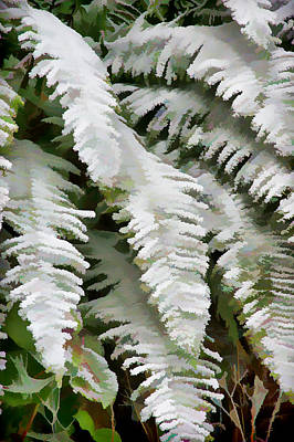Photograph - Frosty Ferns by Ron Roberts