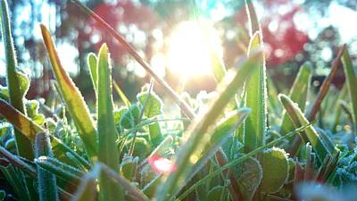 Photograph - Frosty Flare by Tyson Kinnison