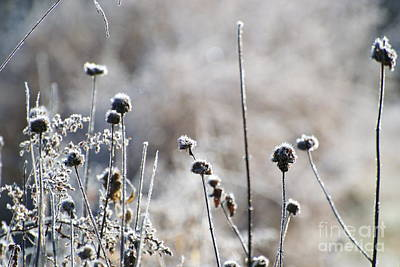 Frosty Flowers Art Print