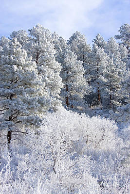 Steven Krull Royalty-Free and Rights-Managed Images - Frosty Forest by Steven Krull