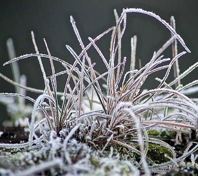 Photograph - Frosty Grass by Karen Grist