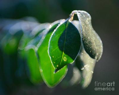Photograph - Frosty Green by Maria Urso