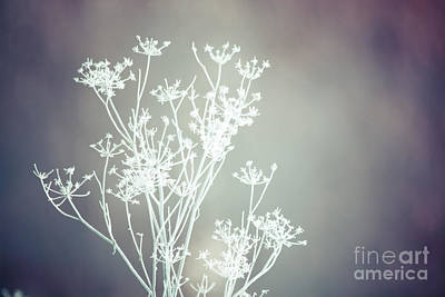 Photograph - Frosty Lace by Cheryl Baxter