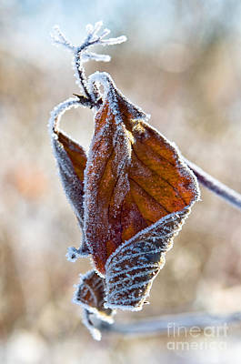 Photograph - Frosty Leaf by Terry Elniski