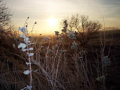 Photograph - Frosty Leaves At Sunrise by Mary Wolf