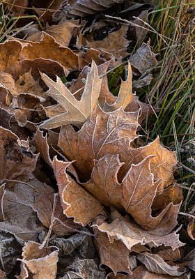 Frosty Leaves  Art Print