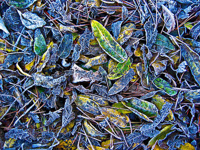 Photograph - Frosty Leaves by Thomas Hall