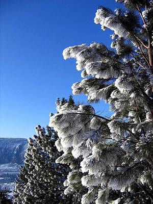 Photograph - Frosty Limbs by Will Borden